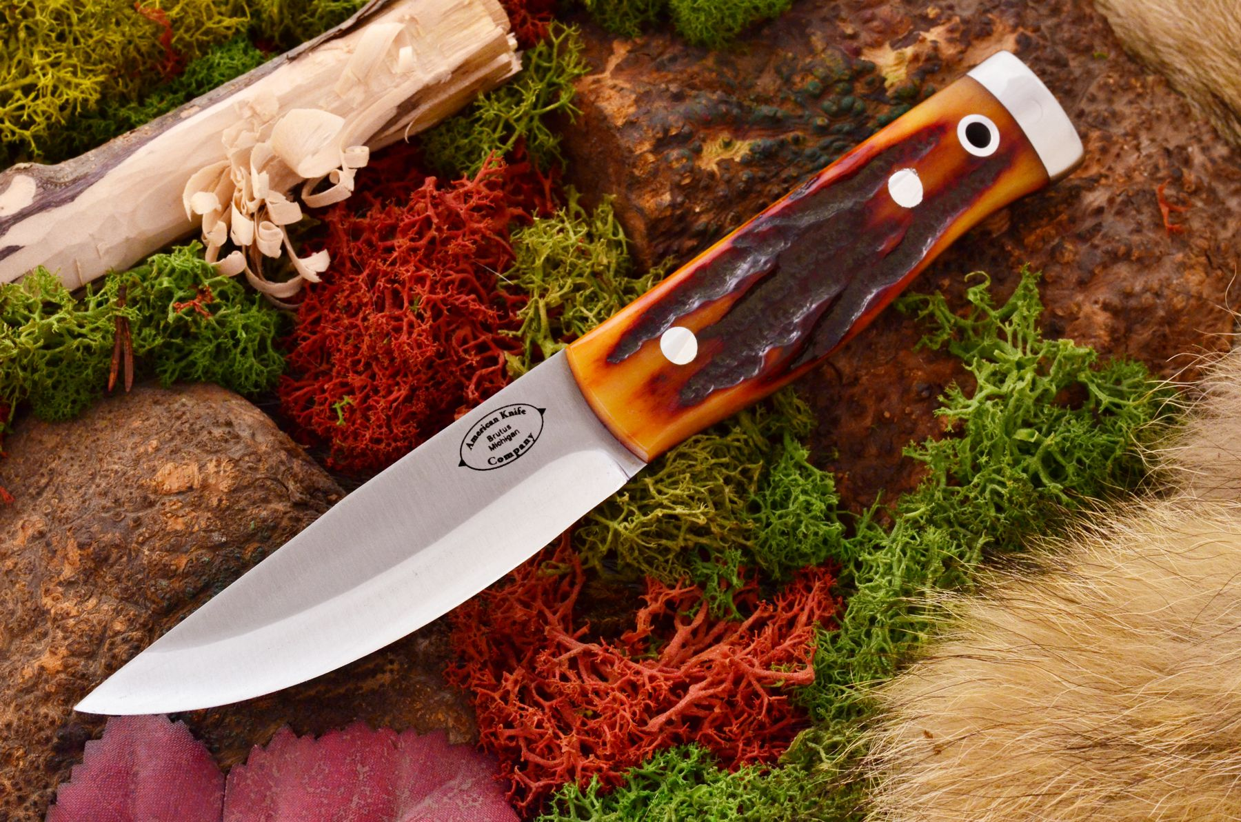 akc forest compact amber stag bone 359.95